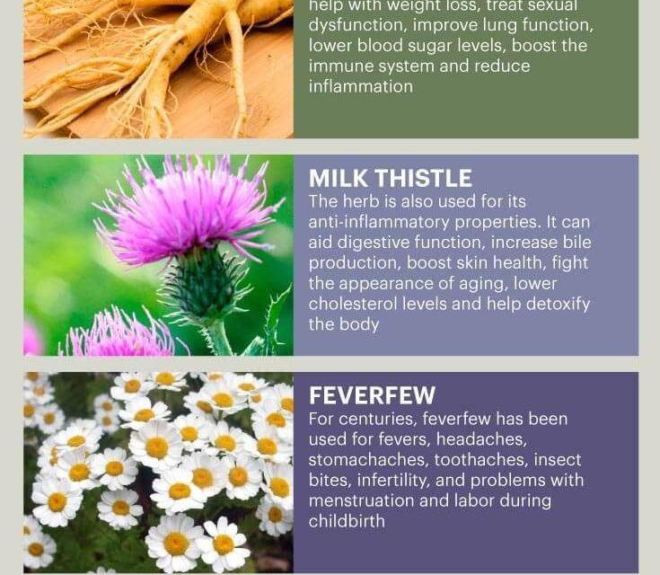 Herbal Medicine & the Top 10 Herbal Medicine Herbs – Dr. Axe